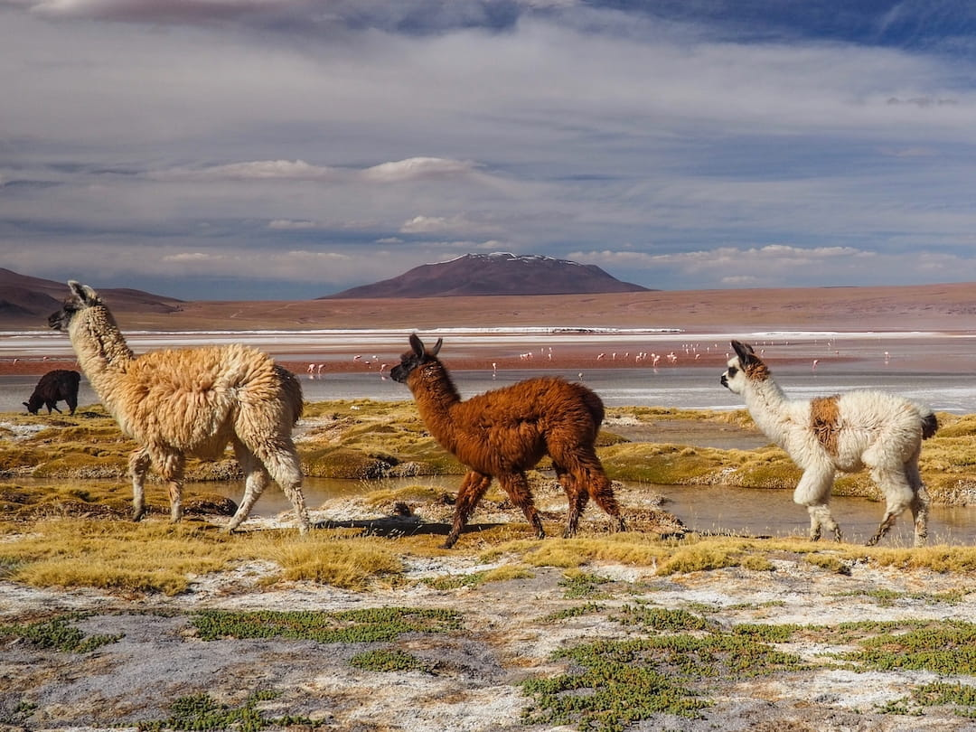A VIRTUAL JOURNEY THROUGH THE ANDES MOUNTAINS