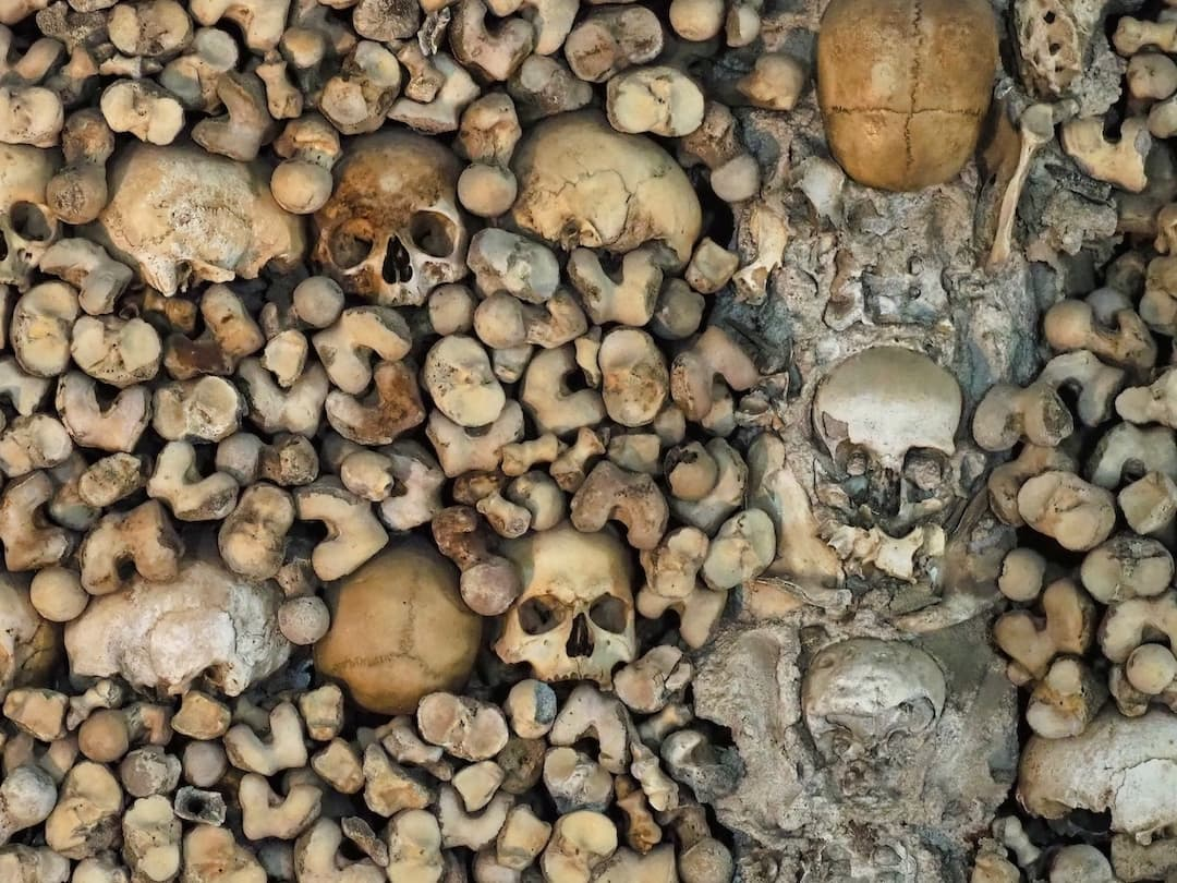 A close-up shot of human bones embedded in a wall