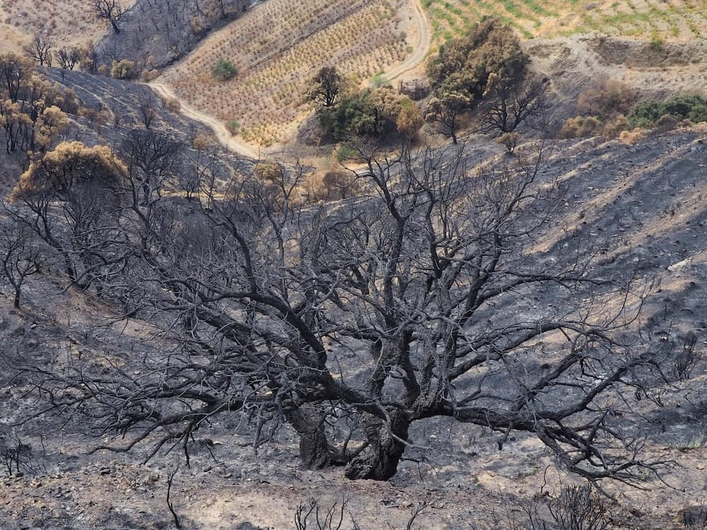 A burnt tree in the middle of an ash laden landscape