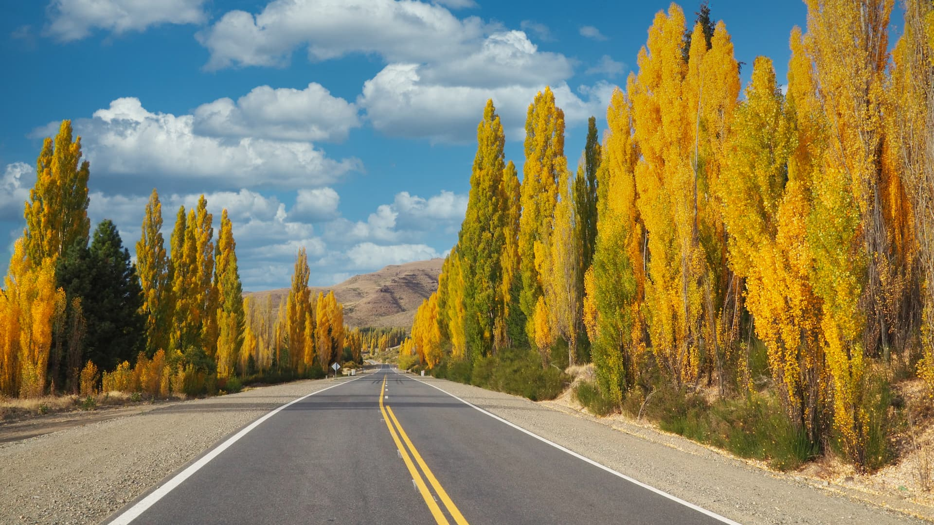 A road with two yellow lines running down the middle with yellow-leaved trees on either side