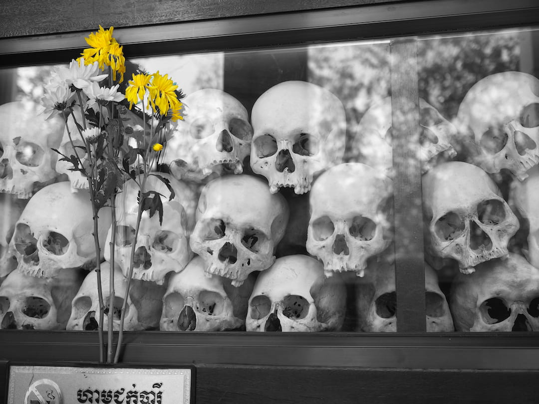 2 yellow flowers standing in front of a display box containing human skulls