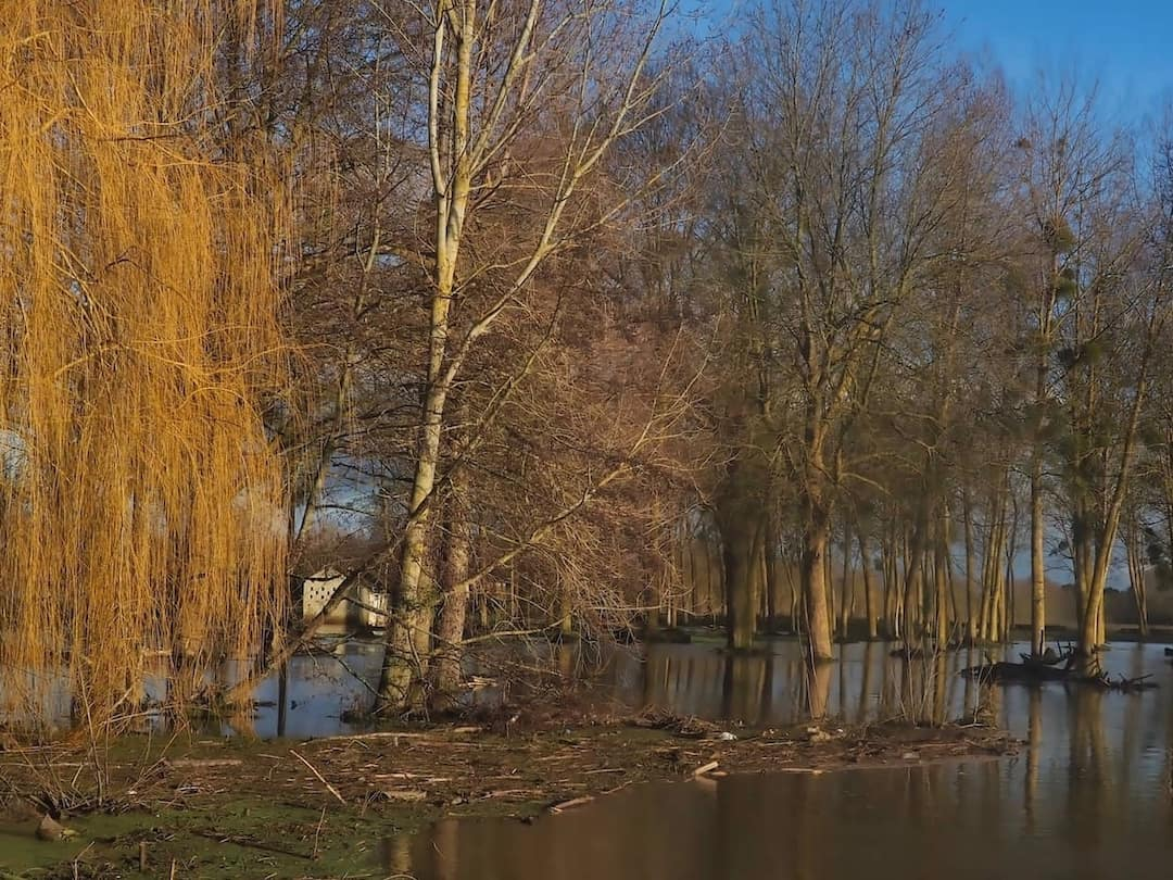 Trees standing in a flooded field