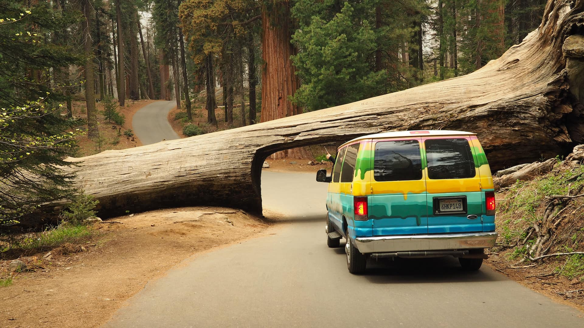 A multi-coloured van is parked in front of a fallen tree across the road, with a tunnel carved through its trunk