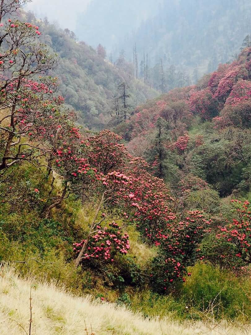 A green valley filled with red flowers
