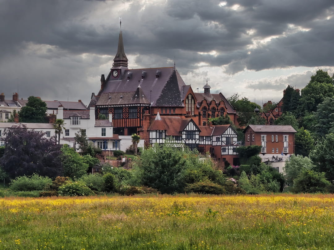 A filed of yellow flowers in the foreground and a large red-bricked building with with a spire in the background