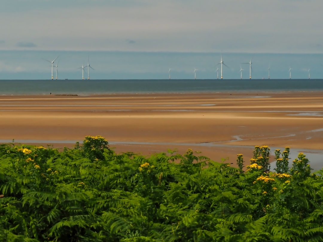 Green foliage in the foreground, a beach in the middle ground, wind turbines out at sea in the background